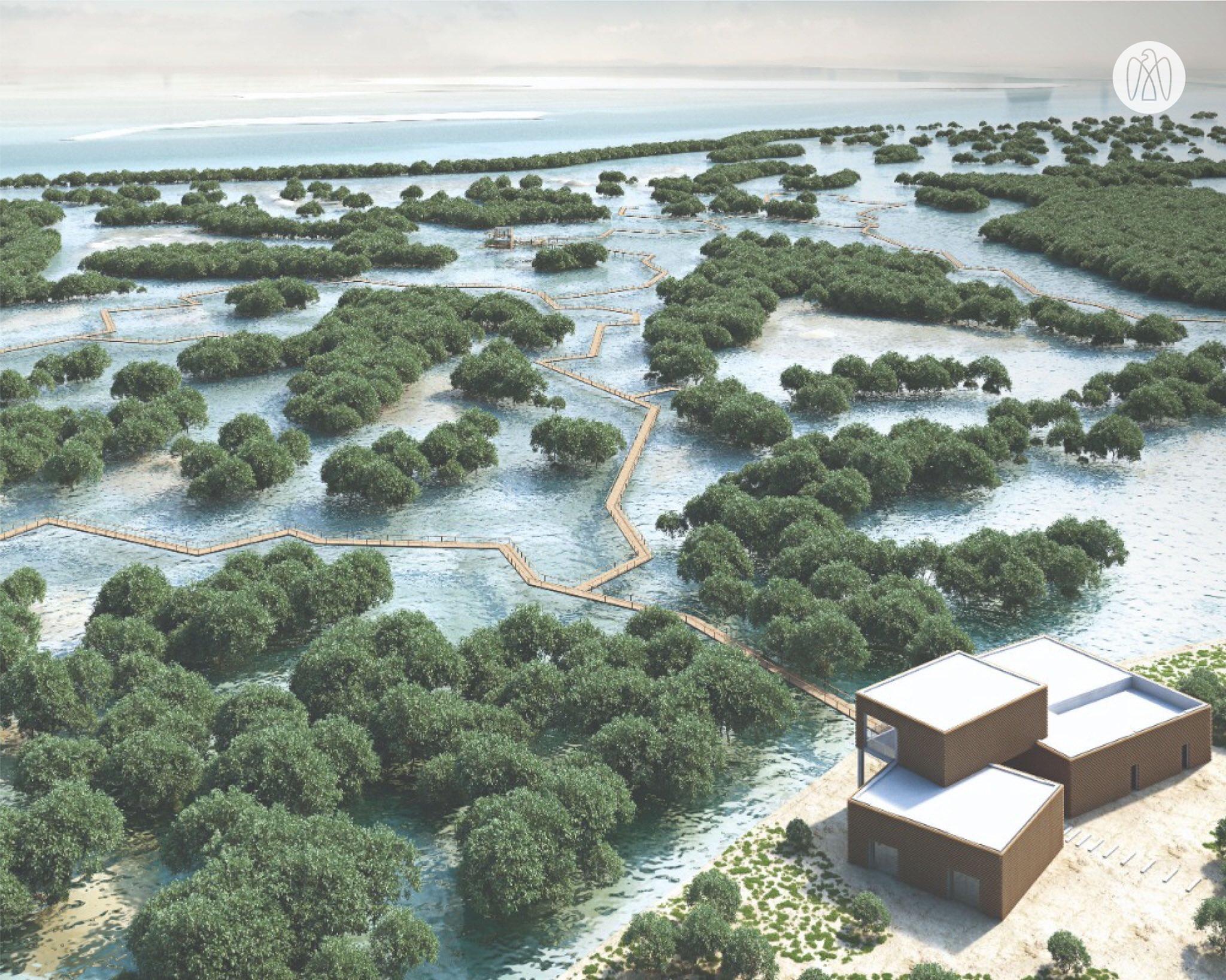 Абу Даби мангровый парк